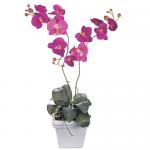 orquidea-lila-con-base