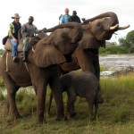 Elephant Encounter Livingston Zambia